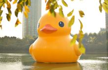 rubber-duck-546253_640